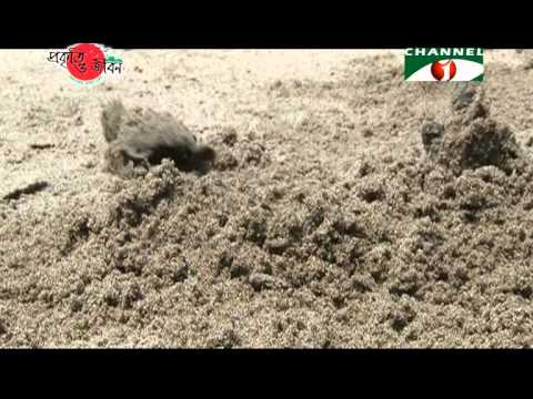 Nature and Life - Episode 187 (Biodiversity of Saint Martin's Island)