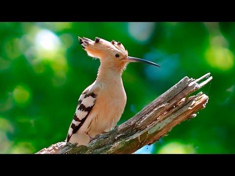 Вопрос: Как называется эта серая птица со странным клювом?