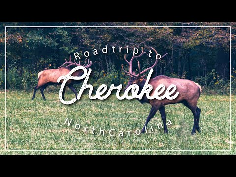Road Trip To Cherokee - Things To Do In Western North Carolina - Asheville, Dandridge, Pigeon Forge.