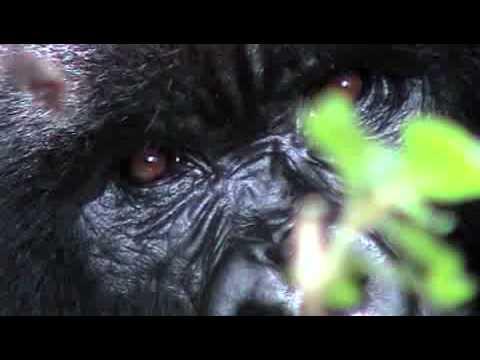 Conservation in Congo - The Development of the Lossi-Odzala Interzone