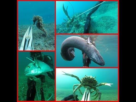 Podvodni ribolov - relax