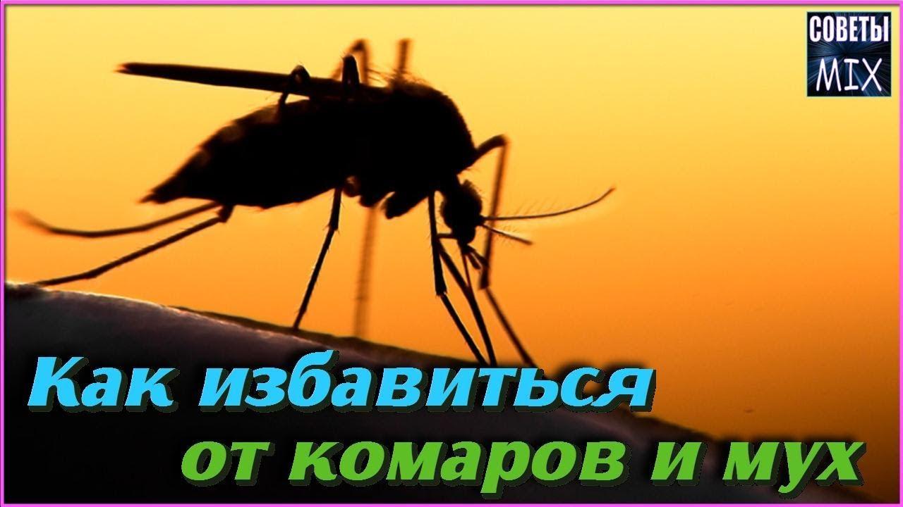 Как избавиться от комаров и мух с помощью этих необычных растений