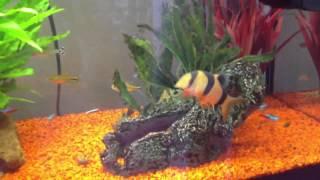 my 125l tropical aquarium