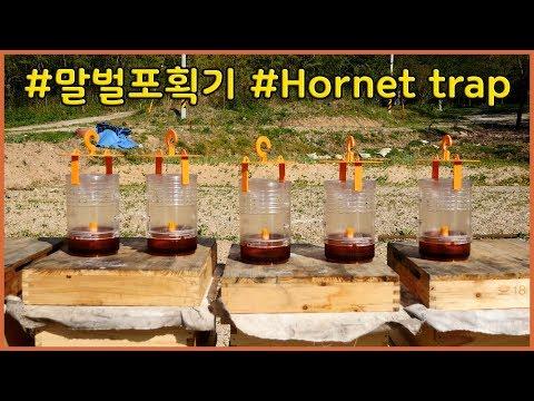 🕵여왕말벌을 잡기위해 말벌포획기 설치