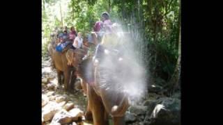 elephant trekking à Koh Chang
