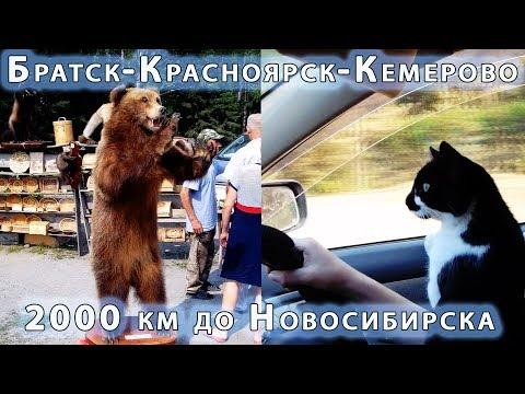 Братск-Красноярск-Кемерово. 2000 км до Новосибирска на машине с животными.