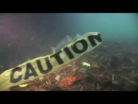 The Great Pacific Garbage Patch - Paradise Junction