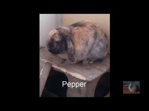 English Cocker Spaniel-Hündin Hanna Habea 4 Jahreиз YouTube · Длительность: 28 с