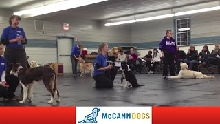 Sense The Border Collie Shows Off Some Dog Obedience Skills In Lesson 1