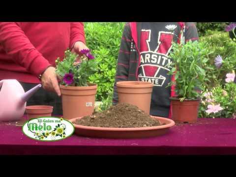 Fil-Gnien ma' Melo (Programme from Derek Garden Centre with Kids 2) / 2014