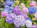 厳選 AJISAI 22曲サビメドレー【歌詞付き】