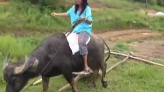 HOW TO RIDE THE CARABAO DEMO BY THE FILIPINA WIFE A BRITISH EXPAT LIFESTYLE VIDEO