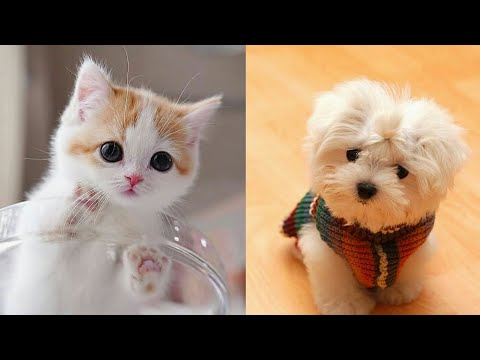 Cute Puppies Doing Funny Things 2020 Cute moment of the animals - Cutest Animals - CuteAN Animals