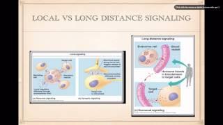 Cell Signaling Basics
