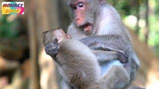 Jane mom warn Janet many try to milk | Jane don't agree tiny Janet milk | Monkey Daily 4574