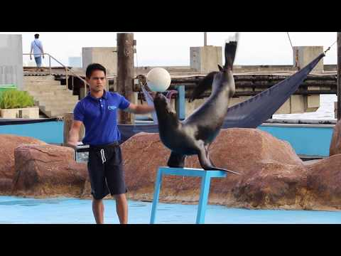 Vlog #10 - Sea Lion Show - Manila Ocean Park - Philippines