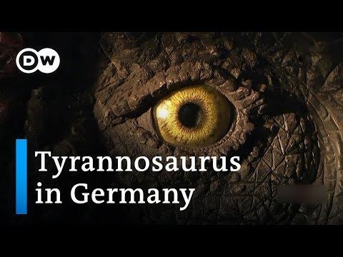 The Dinosaur Village   DW Documentary