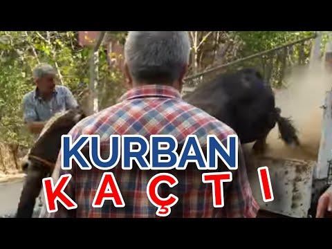 bull festival türkiye