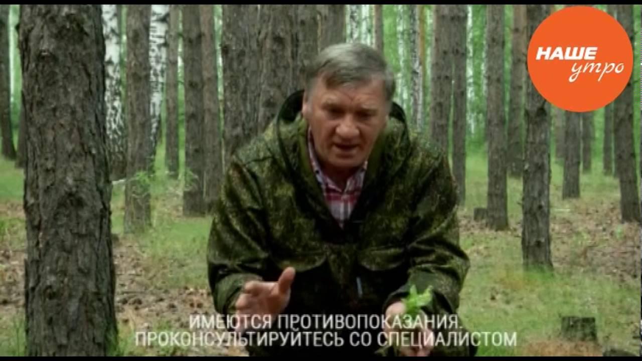 В комплексе с боровой маткой корень этого растения способен творить. Купить корень красной щетки для лечения и профилактики миом, аденом,