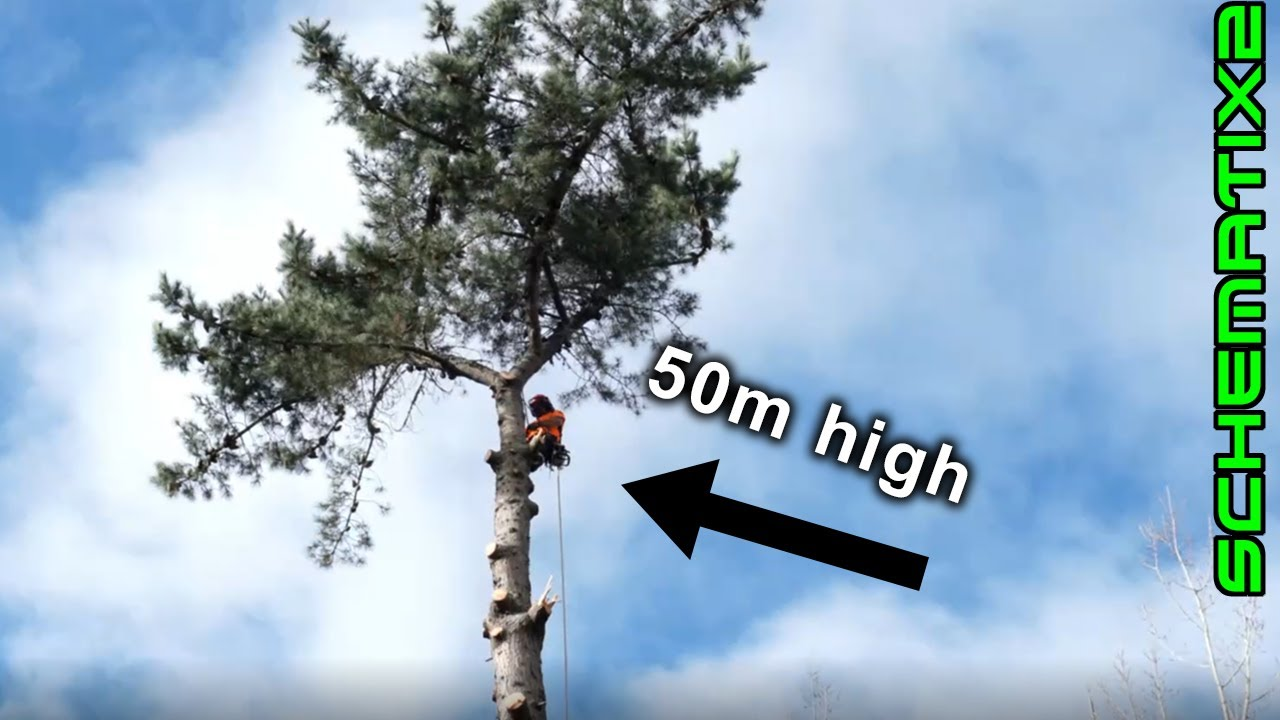 Big Ol' Tree coming down! Time-lapse