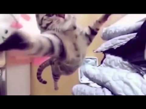 Funny Cats Compilation 【Part 6】