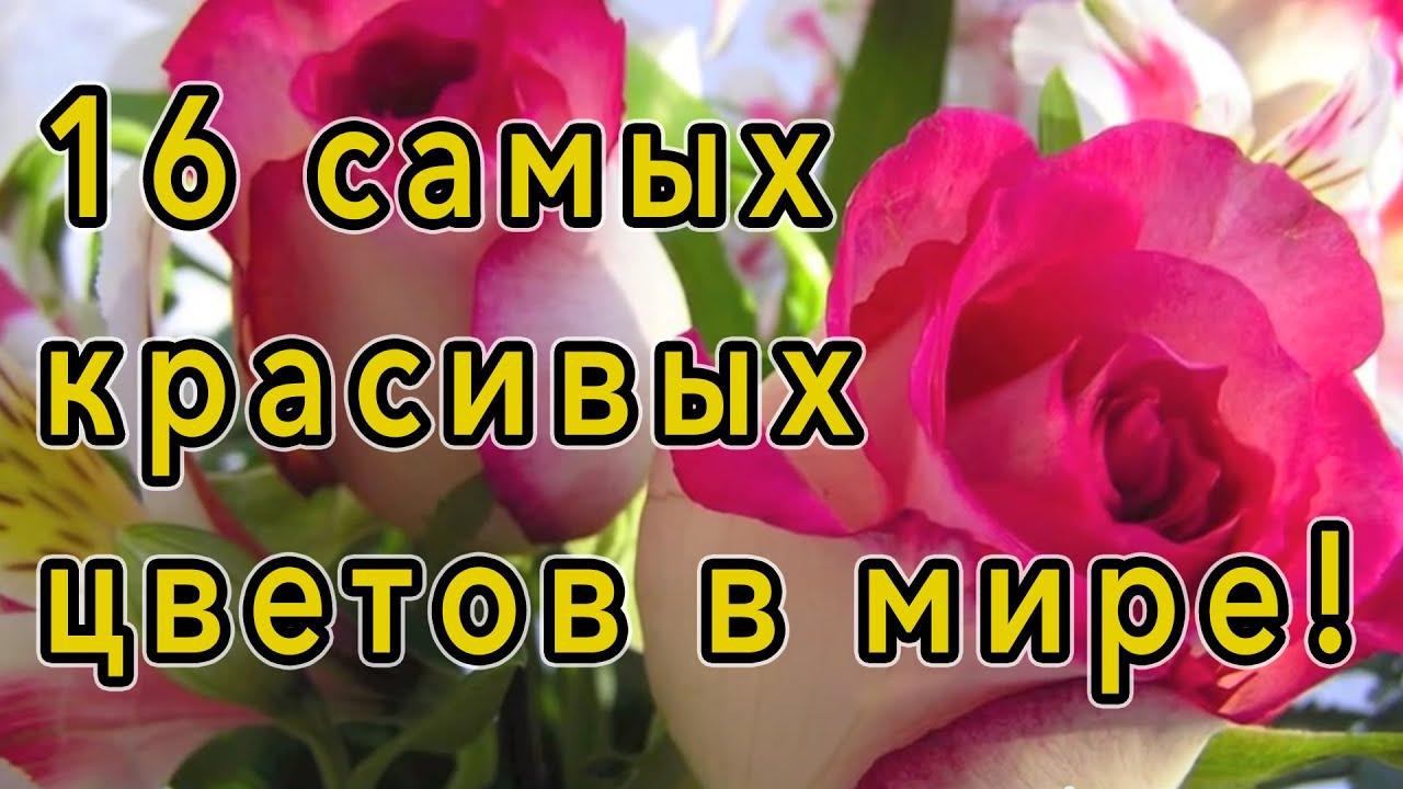 Музыкальные цветы фото и названия