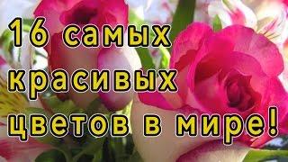 ♥ Самые красивые цветы в мире! ♥