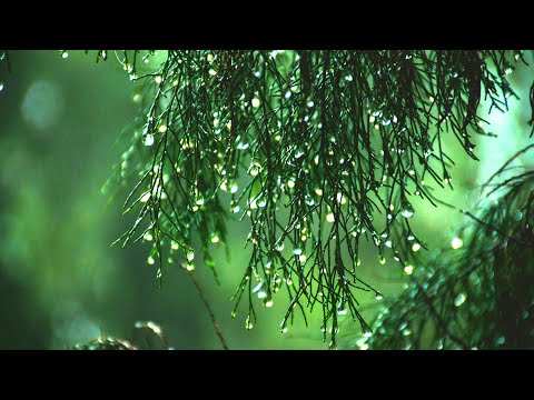 Relaxing Music + Soft Rain Sounds. Soothing Music for Sleeping, Stress Relief, Relaxation