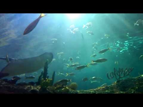 Ripleys Toronto Full Underwater Walkway Video