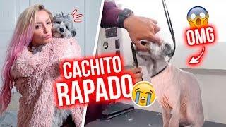 CACHITO SE AFEITÓ Y ESTO PASÓ!!! LO RAPARON!!!😭  28 y 29 Ago 2018