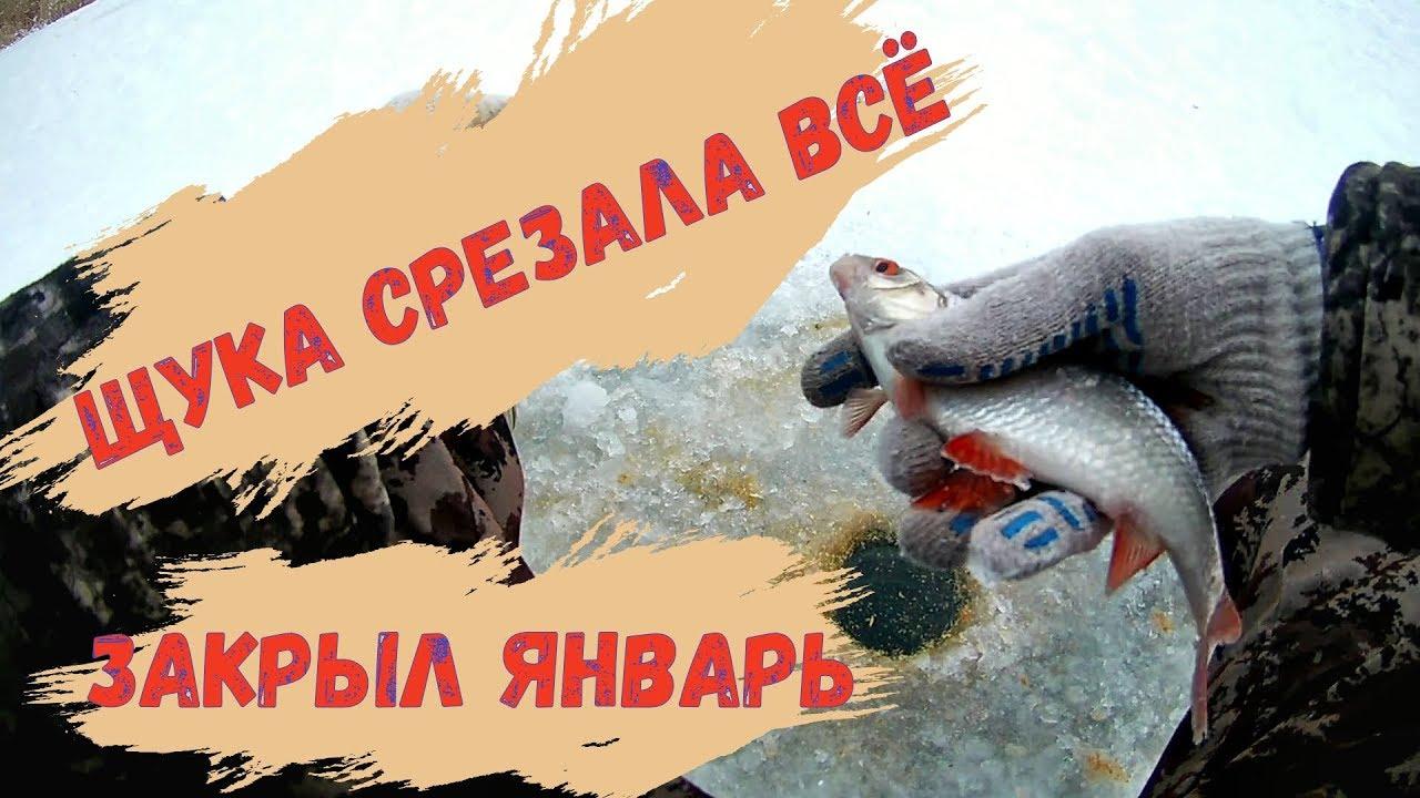 Щука срезала мормышки и жерлицы Рыбалка в январе.