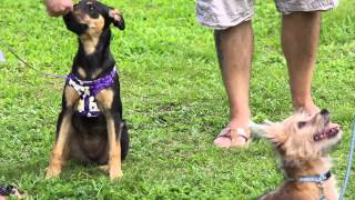 A To Z Dog Training Obedience Classes