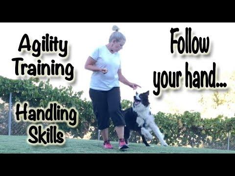 Dog Agility Training: Follow Your Hand - Handling Foundations