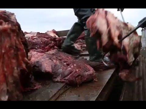 Охота на китов.