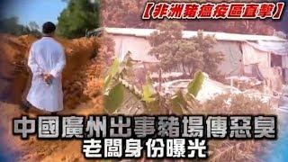豬瘟直擊影片 廣州養豬場一次活埋6000隻豬   台灣蘋果日報