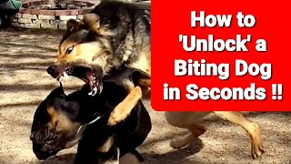 Stop a Dog Fight Instantly  'Unlock' a Biting Dog in SECONDS !!