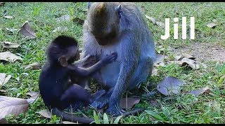 Video Who understand Timo's feeling!! Small baby Timo hungry do short test lull mom Jill for milk. download MP3, 3GP, MP4, WEBM, AVI, FLV Oktober 2018