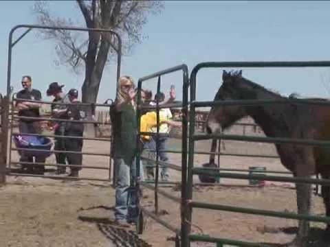 Nebraska Horse Rescue