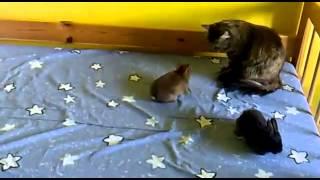 Прикольные кошки Кот пристально наблюдает за кроликами Забавно смотреть!!