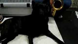 """歌う犬""""蓮""""といいます。 テナーサックスを従えて、狙いうちを歌ってみま..."""