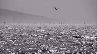 HÜRRİYETE DOĞRU (ŞİİR)- ORHAN VELİ (görüntü (Izmir) Timelapes)