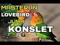 Masteran Lovebird Konslet  Mp3 - Mp4 Download