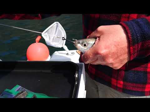 KINGFISH 1.02: LIVEBAIT RIGS