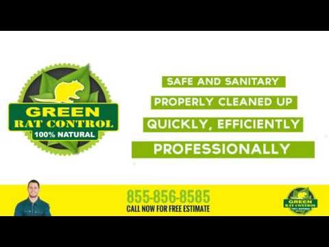 Attic Insulation Services Green Rat Control