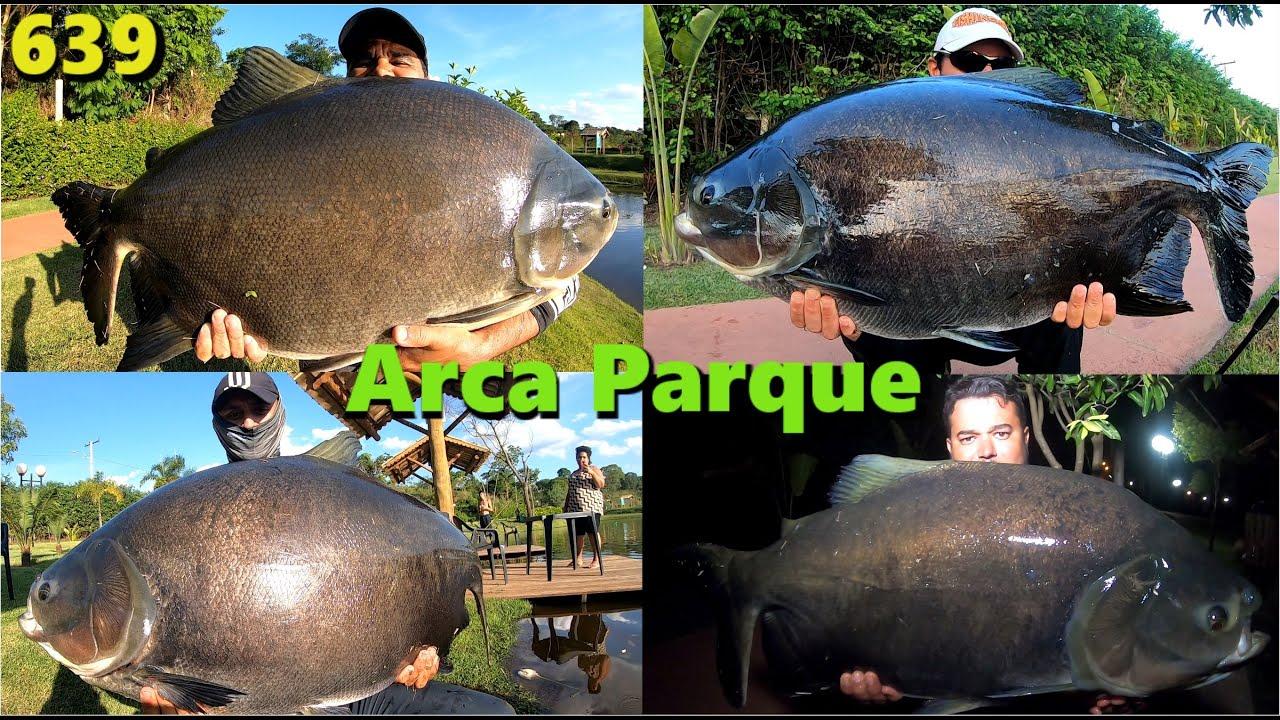 Brigas incansáveis com os Tambas do Arca Parque - Programa Fishingtur 639