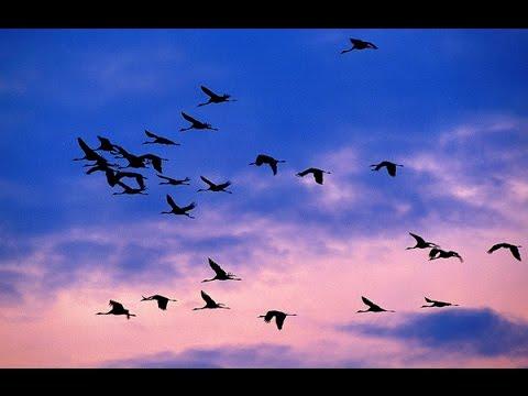 Wonderful bird migration