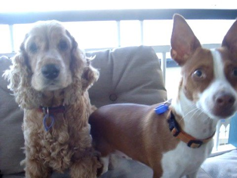 The Magic Word: Dogs Stop Everything They're Doing When Owner Says This (VIDEO)