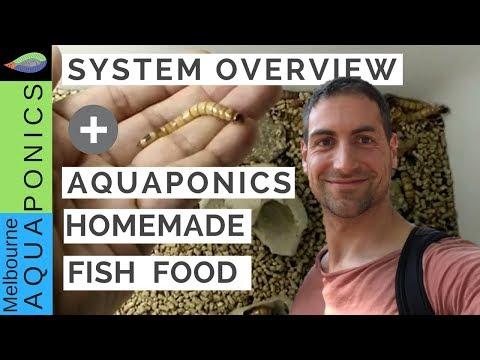 Homemade Fish Food, Aquaponics