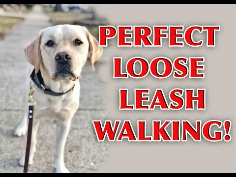 Advanced Loose Leash Walking (Episode 1)