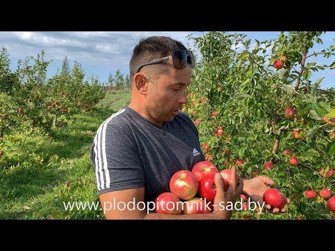 Вопрос: Какие сорта яблони имеют алую мякоть?
